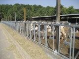 5 Op zwaar werk berekende Uitstekende kwaliteit Gegalvaniseerde Headlocks van koeien