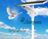 Crepuscolo solare dell'indicatore luminoso di via di serie della colomba di bianco all'alba