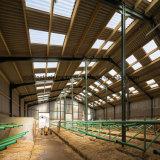 La capra prefabbricata dell'acciaio per costruzioni edili si è liberata di per la vendita