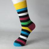 Vestiti negli alti calzini di colore di modo dal calzino del vestito del ginocchio sveglio felice bianco del banco