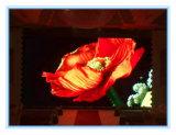 P10 Exposição colorida ao ar livre Smd 3535 (1R1G1B)