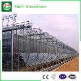 China-Lieferanten-niedrige Kosten Multi-Überspannung Glas-Gewächshaus