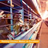 Тип клетка h поставкы фабрики Китая автоматический цыпленка слоя батареи