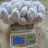 2016 чеснок Ajo/Alho 10kg