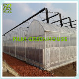 Casa verde de película plástica de Multispan para o tomate
