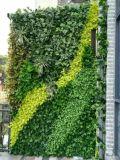 Piante di alta qualità e fiori artificiali del giardino verticale Gu-Mx2091520