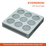 Hoogste LED Grow Light voor Distribution