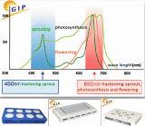 L'ÉPI LED du best-seller 126W se développent léger pour la serre chaude de culture hydroponique