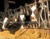 Grade Premium Animal Feed da vendere