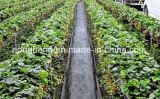 Estera plástica de bloqueo ULTRAVIOLETA del control de los PP Weed del jardín