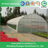 高品質の販売のための単一のスパンのプラスチックフィルムの太陽温室