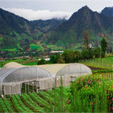 열 절연제 기능을%s 가진 농업 농장 다중 경간 플레스틱 필름 온실