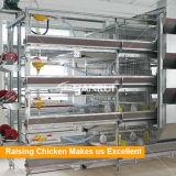 Гальванизированные клетки цыпленка младенца поднимая дом