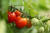 Machine de nettoyage de bulle pour des Légume-Tomates de fruit