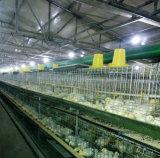 As aves domésticas pré-fabricadas da construção de aço abrigam/casas de galinha da construção aço da luz