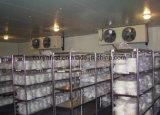 Unidad de refrigeración de la conservación en cámara frigorífica para la fruta y verdura
