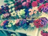 고품질 실크 꽃은, 인공 꽃 장미 도매한다