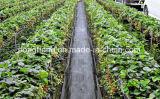 منتوجات زراعيّة بلاستيكيّة - مضادّة [ويد] حصير صاحب مصنع