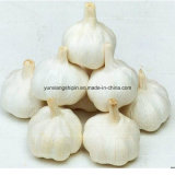 中国の新しい穀物のPurelの白のニンニク