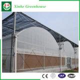 野菜のための商業プラスチックフィルムの温室