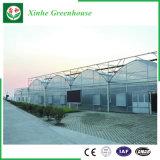 Serra di plastica di agricoltura/annuncio pubblicitario/giardino con il sistema di raffreddamento