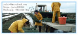 Sacchetto /Cage della maglia dell'ostrica di alta qualità