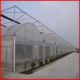 야채를 위한 농업 농장 다중 경간 플레스틱 필름 온실