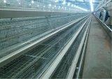 Le poulet intense et durable met en cage le matériel pour la ferme avicole pour la poulette (un type)