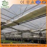 Venlo Roof Paneles de invernadero de policarbonato Invernadero de vidrio templado