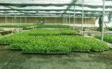 雑草防除のためのPPによって編まれるファブリック