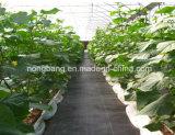 Tela tecida PP agricultural preta do controle de Weed