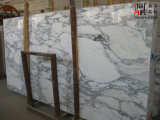 Сляб Arabescato Corchia белый мраморный для плитки настила плакирования стены/строительного материала