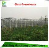 Multi Überspannungs-Handelswasserkulturgrünes Glashaus für Himbeere