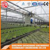 Serre chaude de feuille de PC de bâti en acier d'agriculture avec le système de régulation