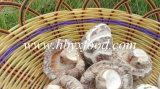 Высушенные гриб белого цветка/овощ Dong Gu