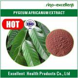 Het Uittreksel van Africanum van Pygeum voor het Behandelen van Prostatosis