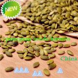 Noccioli dei semi di zucca della pelle di lustro