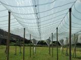 Gewächshaus-Hagelschutznetz für schützendes Gemüse und Früchte