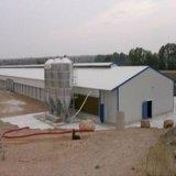 La casa de pollo prefabricada/las aves de corral de la estructura de acero contiene