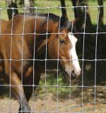 Heißer Verkauf galvanisierter Pferden-Zaun-Preis