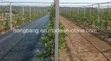 بيئويّا آمنة طويلة - عبارة بلاستيكيّة [ويد] حصير أرض تغطية