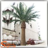 卸売の常緑のヤシの木の屋外の装飾的な人工的なナツメヤシの木