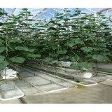 저가 필름 토마토 오이를 위한 Hydroponic 시스템 녹색 집