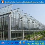 Professionelles preiswertestes Glas ausgeglichenes Glas-Isoliergewächshaus