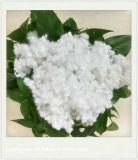 Polyeaster Satple Fiber (Silicium creux)