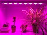 O diodo emissor de luz cresce a barra clara com copos do refletor