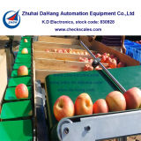 Pesatura di controllo delle verdure e macchina del sorter del peso