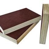 خشب صلد واجه لب أو حوض لب [12مّ] [15مّ] [18مّ] [بروون] أو [كلور فيلم] سوداء بناء خشب رقائقيّ مع سعر جيّدة