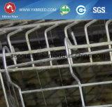 Grande cage d'oiseau de ferme en vente chaude