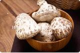 Низкая цена для сухих грибов Shiitake цветка